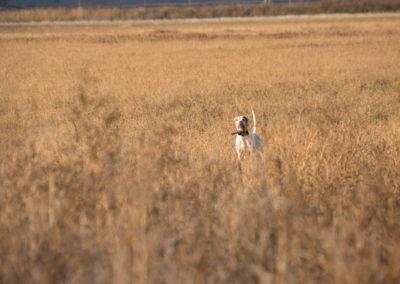The Way It Was TV 2017 Kansas Upland Bird Hunting 02