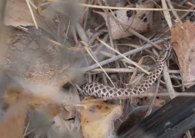 The Way It Was TV 2017 Kansas Upland Bird Hunting 12
