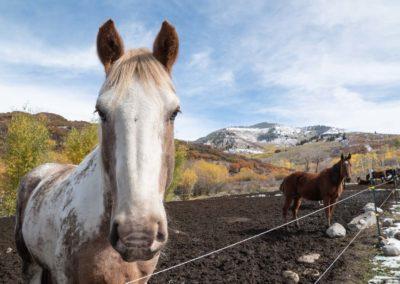The Way It Was TV 2018 Colorado Elk Bucks Bulls 11