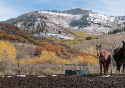 The Way It Was TV 2018 Colorado Elk Bucks Bulls 16