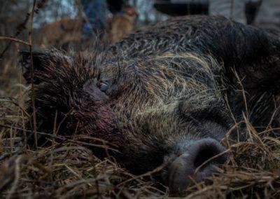 The Way It Was TV 2018 Louisiana Hogs Hoops Net Fishing 02