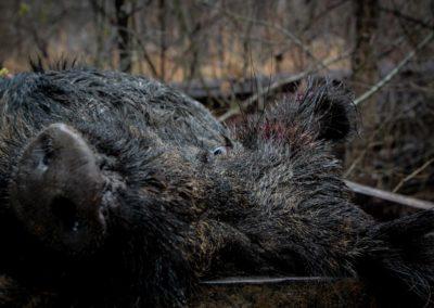 The Way It Was TV 2018 Louisiana Hogs Hoops Net Fishing 17