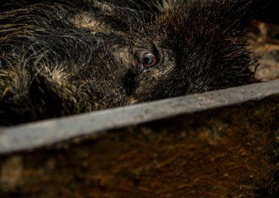 The Way It Was TV 2018 Louisiana Hogs Hoops Net Fishing 20