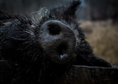 The Way It Was TV 2018 Louisiana Hogs Hoops Net Fishing 23