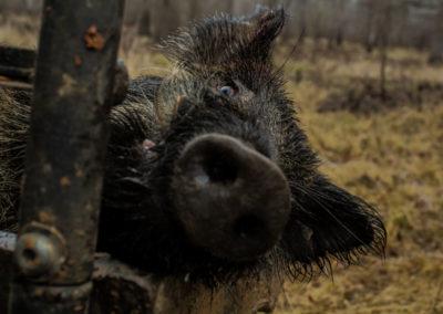 The Way It Was TV 2018 Louisiana Hogs Hoops Net Fishing 25