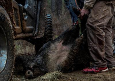 The Way It Was TV 2018 Louisiana Hogs Hoops Net Fishing 31
