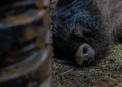 The Way It Was TV 2018 Louisiana Hogs Hoops Net Fishing 32
